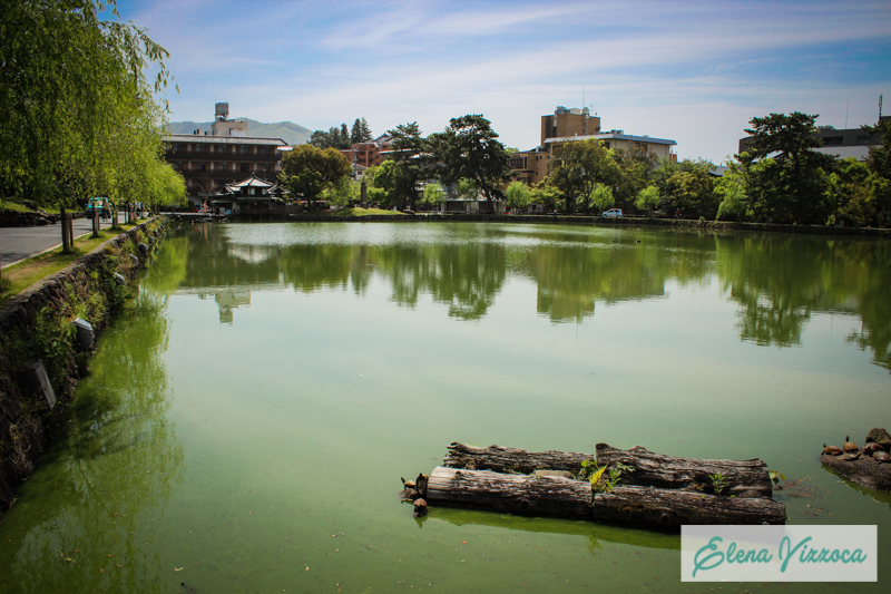 Laghetto delle tartarughe di Nara
