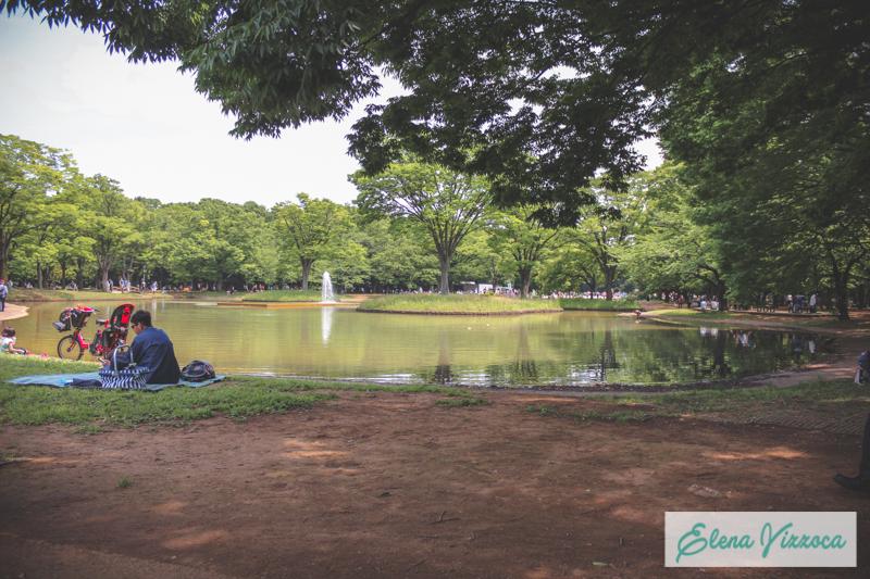 Lago del parco Yoyogi