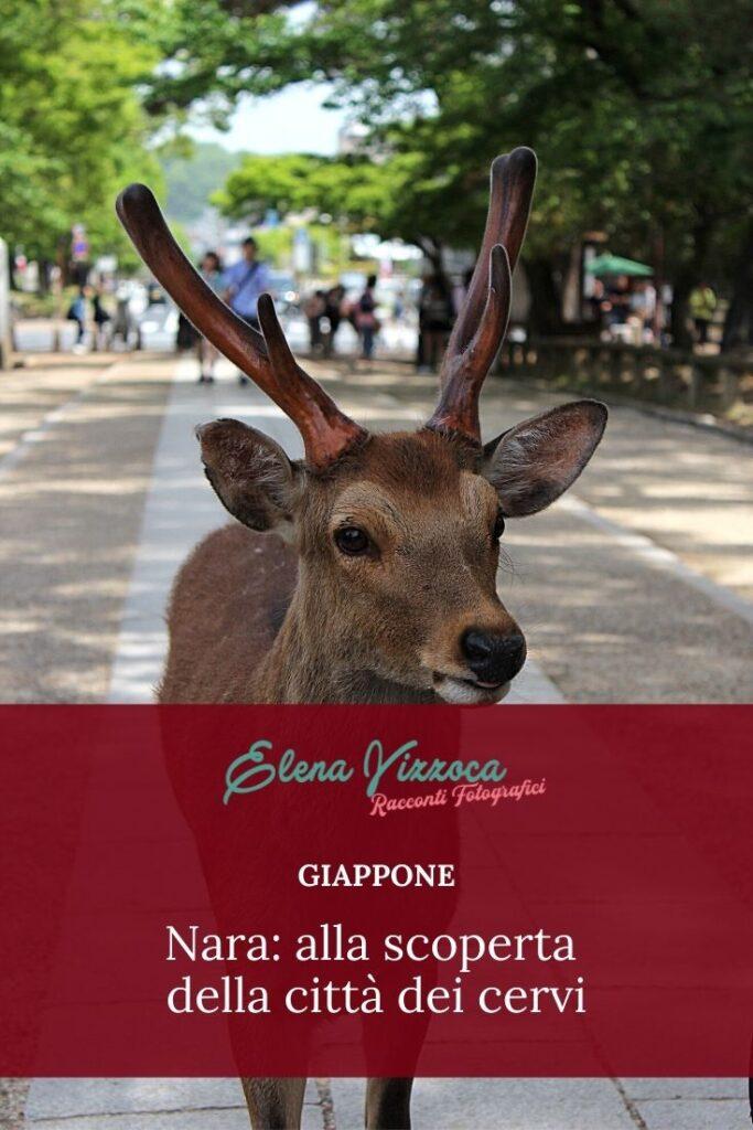 Nara - Condividi su Pinterest - Grafica 1