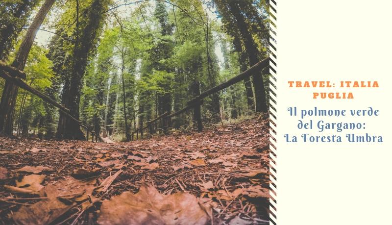 Il polmone verde del Gargano: La Foresta Umbra